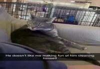 Kissaa kiusataan