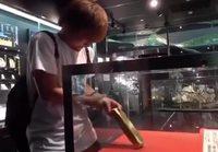 Kultaharkko palikkatesti
