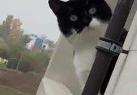 Kyttääjä kissa