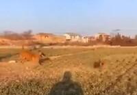 Koiralle pallo