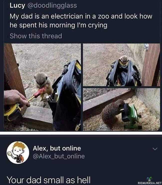 Isä eläintarhassa