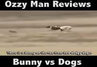 Ozzy Man Reviews