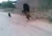 Hevonen myllyttää varsaa