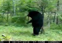 Karhua kutittaa