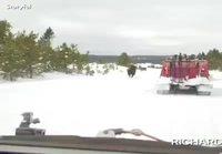 Eläimiä liikenteessä