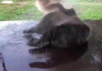 Karhun hauskanpito