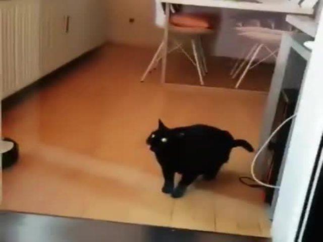 Kissa Ei Ulosta
