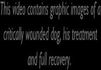 Koira joka sai uudet kasvot