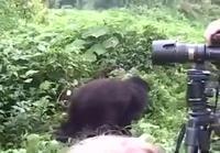 Gorillan voimat