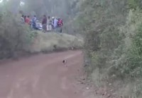 Koira eksynyt reitille
