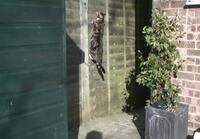 Kissa etenee