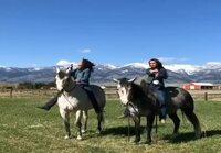 Samppakaljaa ja hevosia