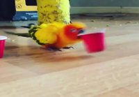 Lintu leikkii