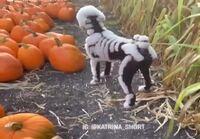 Luiseva koira