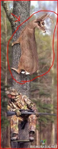 peura ja metsämies