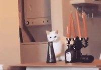 Harkitses kissi liikkees