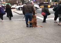 Koira ekaa kertaa kaupungissa