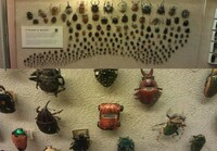 A world of beetles