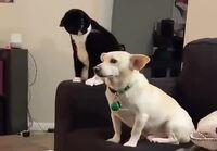 Kissa ja kissan luonto