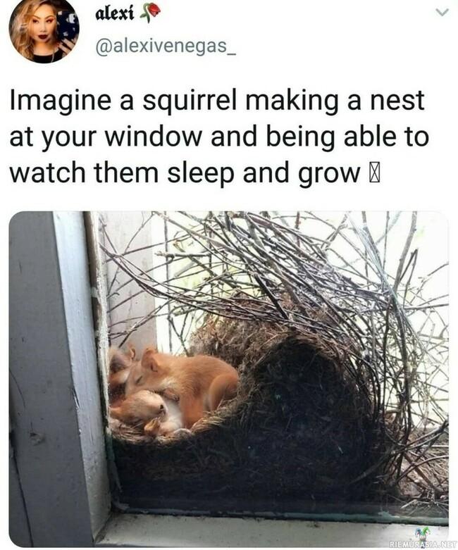 Oravan omakotitalo