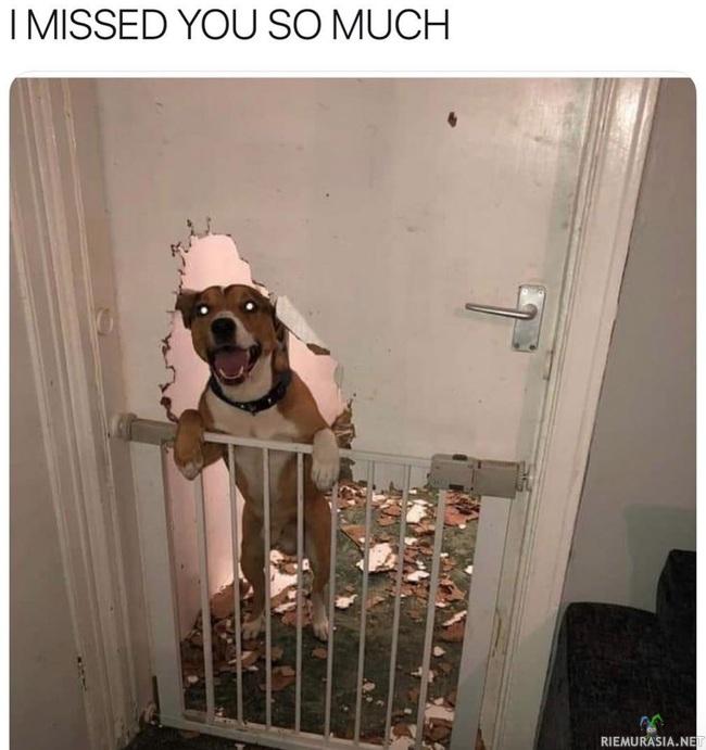 Koira kaipaa
