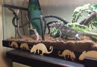 Kameleontti ruokailee
