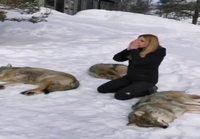 Ulvoo susien kanssa