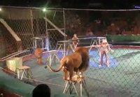 Sirkusleijonat hermostuu