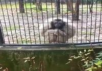 Apinalla asiaa