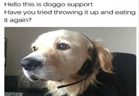 Doggo support