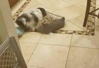 """Koira """"Twerkkaa"""""""