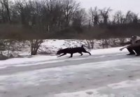 Slaavi koiraa ulkoiluttamassa