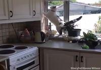Kissa pistää paikat remonttiin
