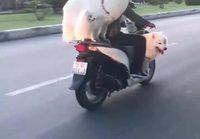 Koirien kanssa ajelulla