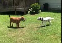 Koira hassuttelee