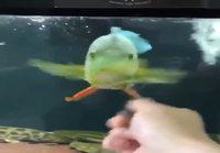 Kalan hypnotisoimista
