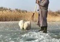 Lammaspaimen kalastaa talvella