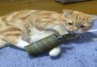 Kissan leikkihetki