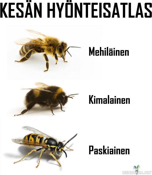 Mehiläinen Ampiainen