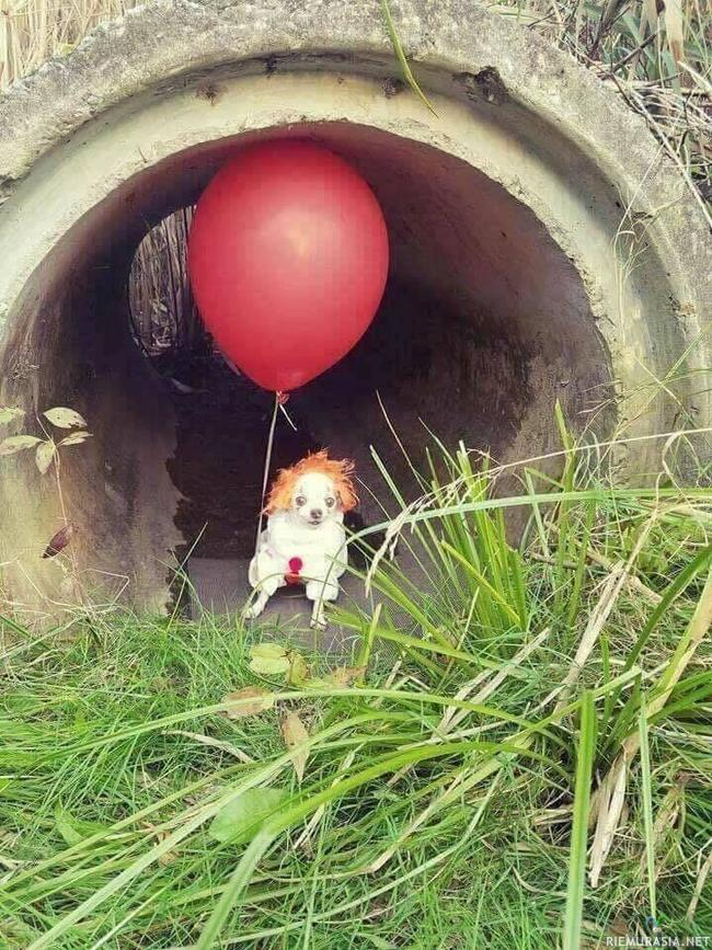 "Pennywise chihuahua - ""we´re all good boys down here"""