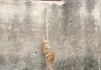 Kissat kiipeävät
