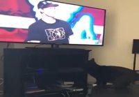 Kissa tuhoaa telkkarin