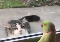 Papukaija leikkii kissan kanssa