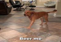 Hyvin koulutettu koira