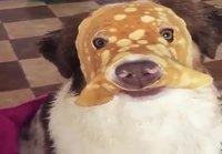 Koiran lettunaamari