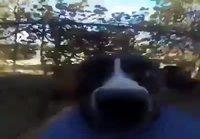 Koira karkuteillä kameran kanssa
