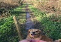 Koira noutaa kepin