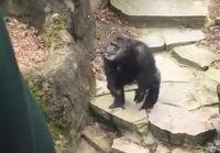 Simpanssin terveiset yleisölle