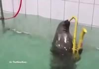 Careless whisper hylje