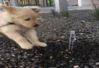 Koiranpentu ja vesisuihku